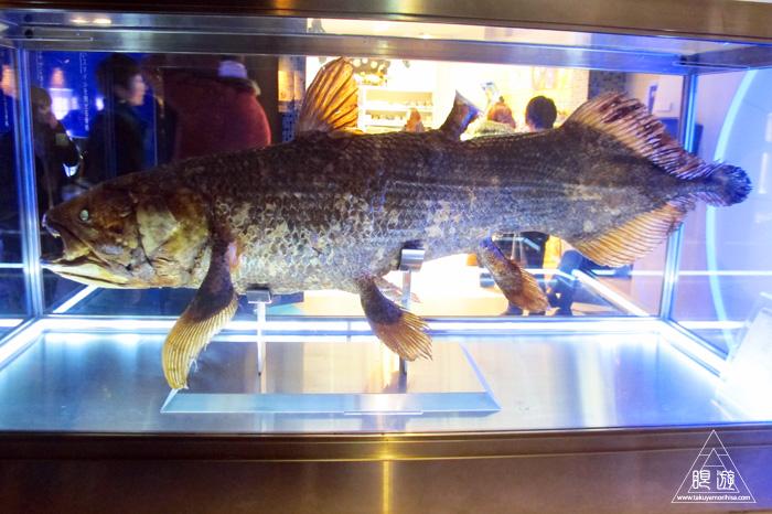 444 沼津港深海水族館 ~日本一の深海水族館~_c0211532_0395313.jpg