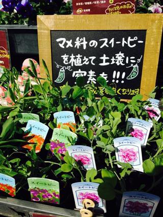 マメ科植物!_c0173939_10365299.jpg