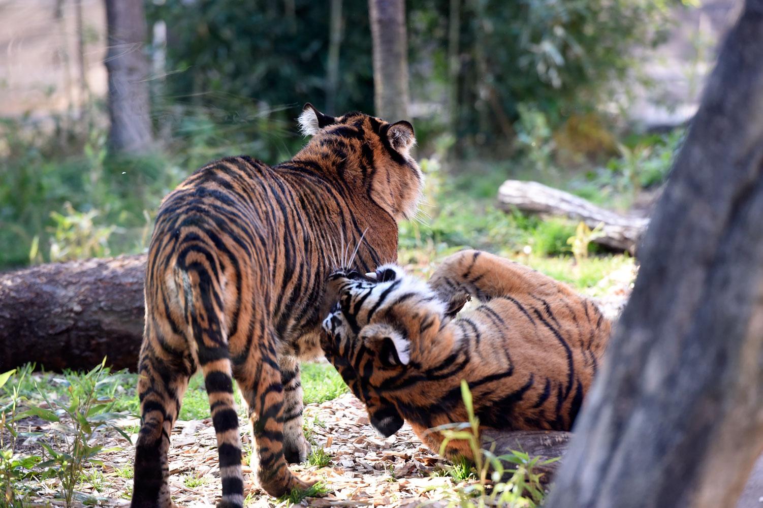 大人の動物園_b0023856_7232074.jpg