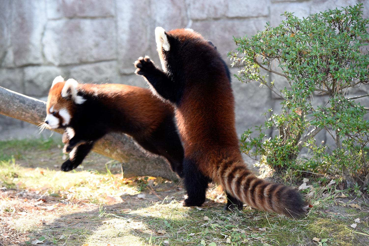 大人の動物園_b0023856_7241029.jpg