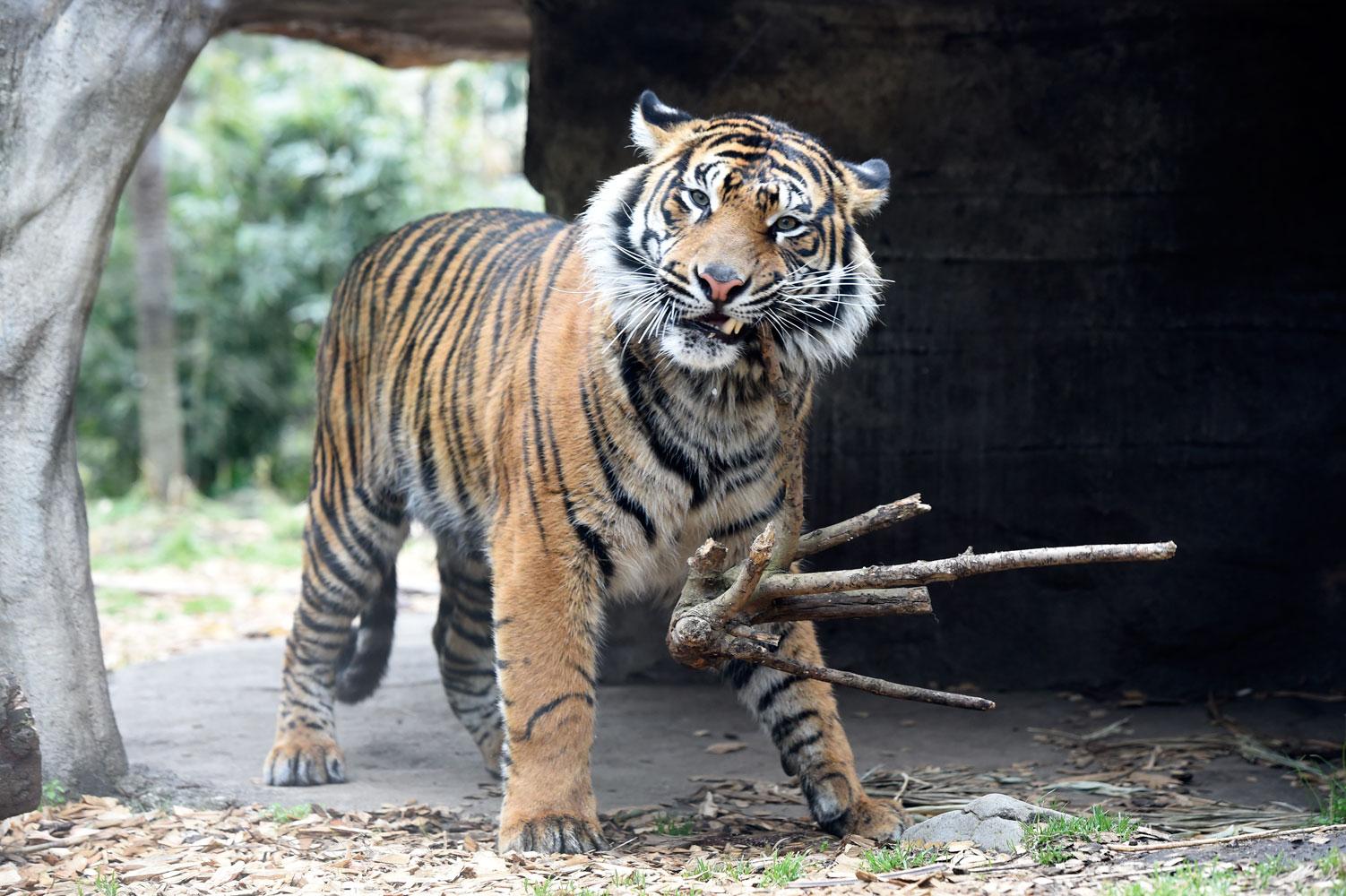 大人の動物園_b0023856_730213.jpg