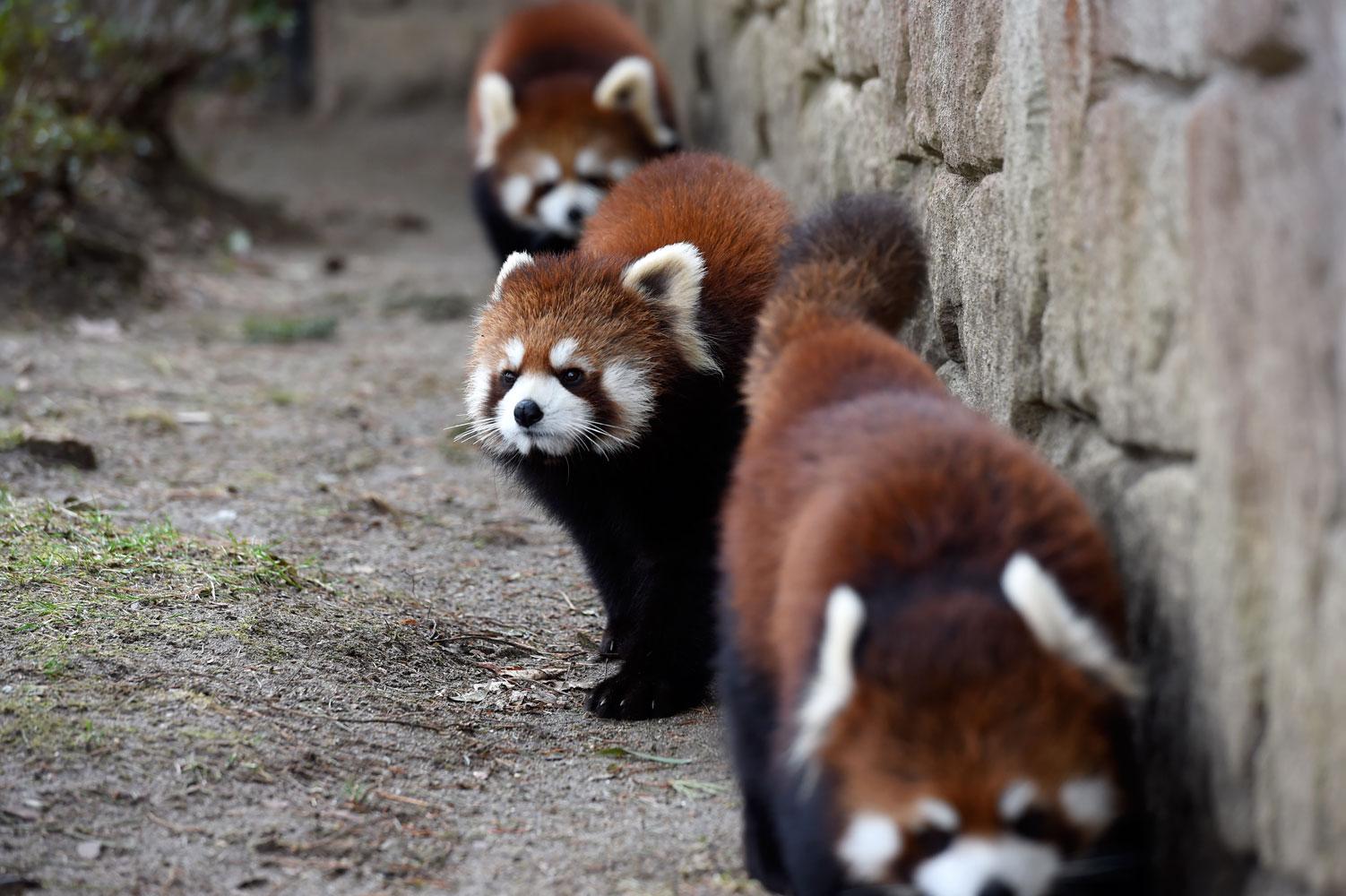 大人の動物園_b0023856_731056.jpg