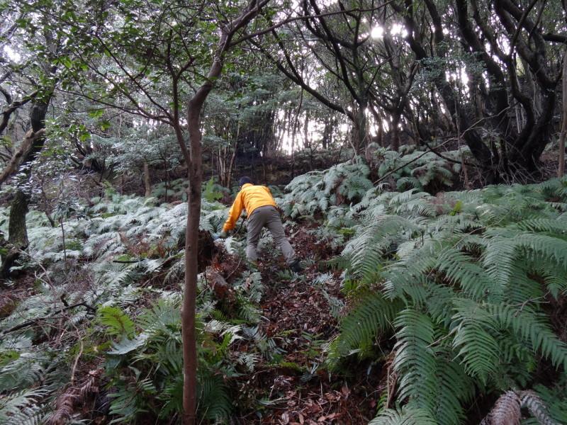 ぼうけん山の新山道の確認  in  うみべの森_c0108460_15554947.jpg