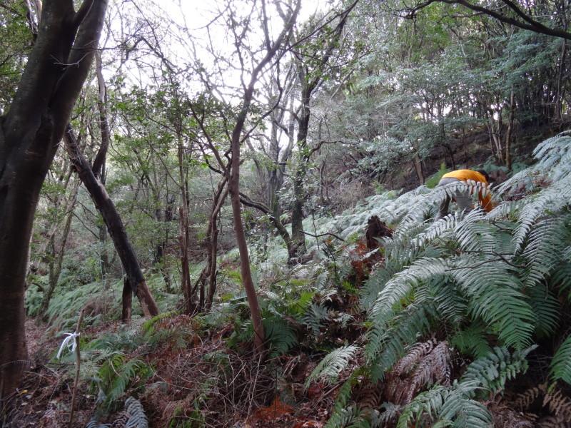 ぼうけん山の新山道の確認  in  うみべの森_c0108460_15555160.jpg