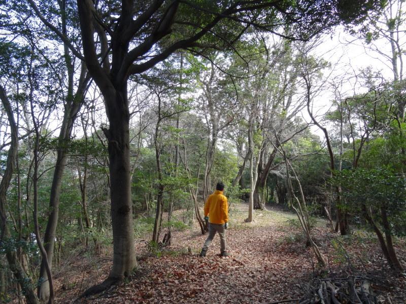 ぼうけん山の新山道の確認  in  うみべの森_c0108460_15570595.jpg