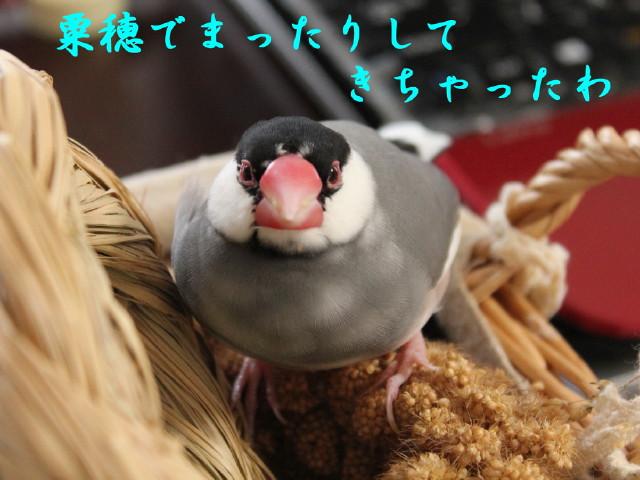 b0158061_20121542.jpg