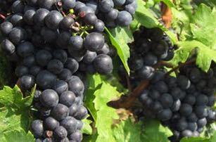 【開催報告】 第1回ルーマニアワイン講座&料理教室 開催報告_d0226963_1684996.jpg