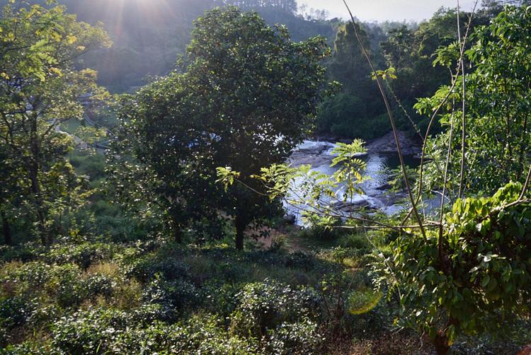 「文明は農業で動く」を訪ねる (スリランカの旅①)_d0231263_23293753.jpg