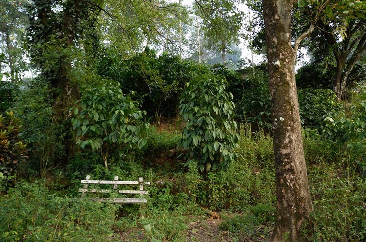 「文明は農業で動く」を訪ねる (スリランカの旅①)_d0231263_2330334.jpg
