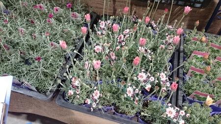 春の花苗を探して_a0292194_14165539.jpg