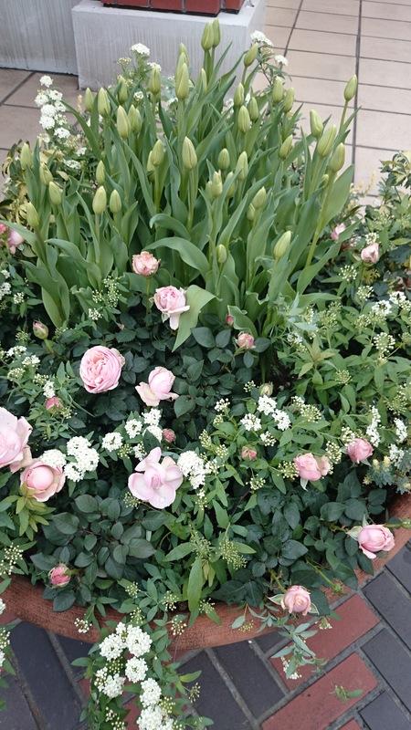 春らしい寄せ植え_a0292194_1522829.jpg