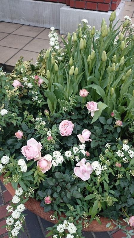 春らしい寄せ植え_a0292194_1585334.jpg