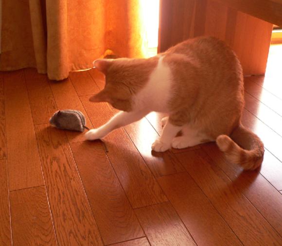 ぶるぶるマウス_a0333195_16001707.png