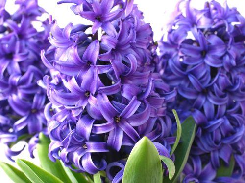 春_a0044241_18657100.jpg