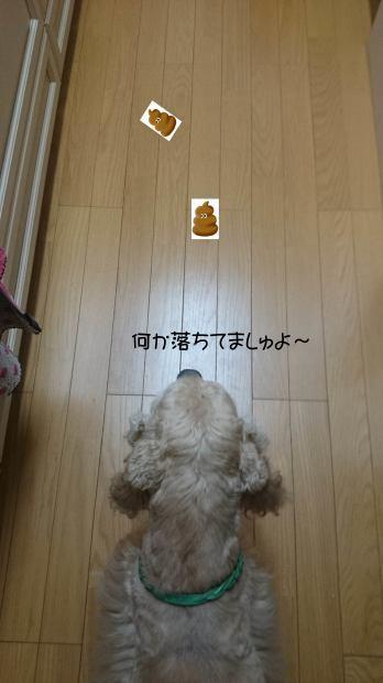 f0218182_17544188.jpg