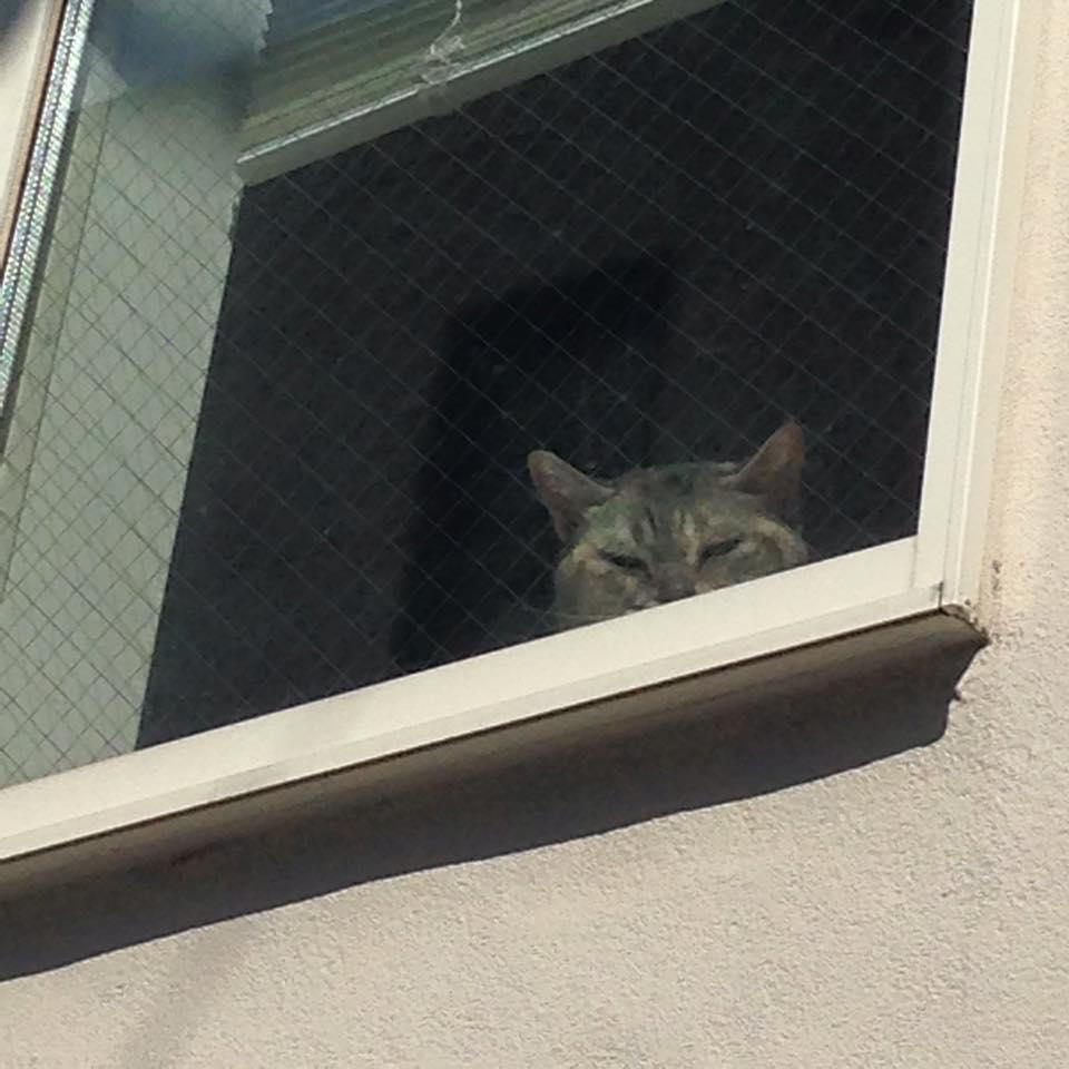Cat\'s life_b0195783_8592985.jpg