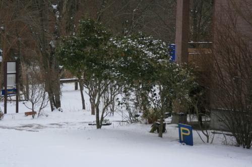 今日は雪でしたが、晴れました_e0179508_14510840.jpg