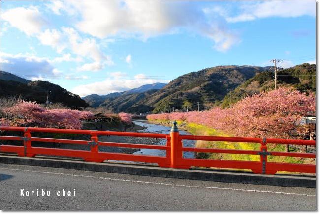 河津桜~&etc…_c0079828_17313097.jpg