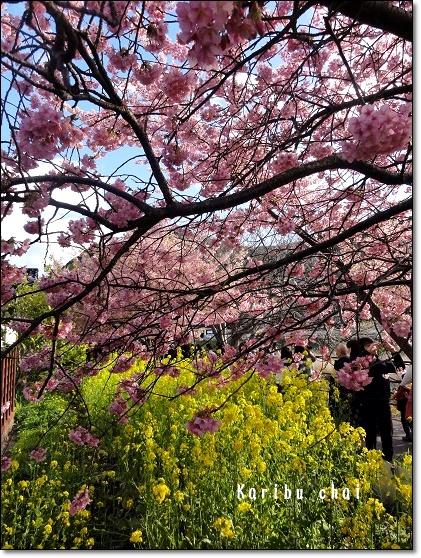河津桜~&etc…_c0079828_17325336.jpg