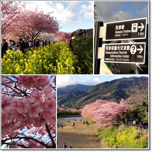 河津桜~&etc…_c0079828_1743249.jpg