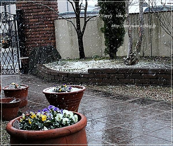 ビビンバ弁当と雪~♪_f0348032_18235345.jpg
