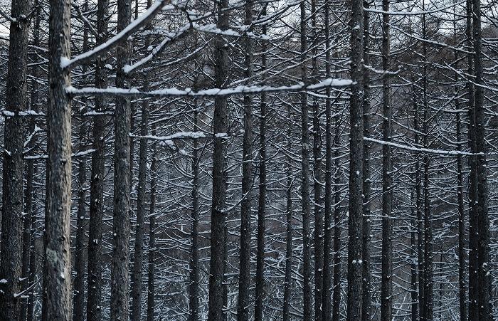 春スキー料金_b0341869_19064537.jpg