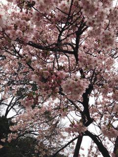 2015.3.10   熱海_a0083571_14182474.jpg