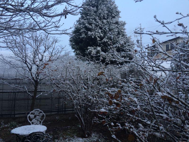 雪が降りました(^^)_e0233674_17523579.jpg