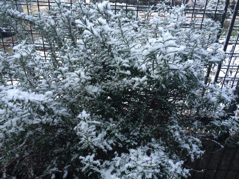 雪が降りました(^^)_e0233674_17523830.jpg