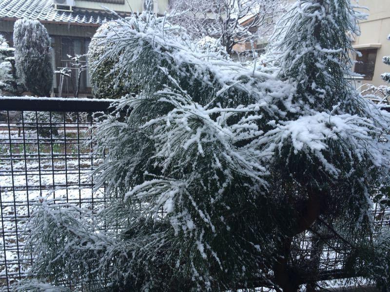 雪が降りました(^^)_e0233674_17544826.jpg