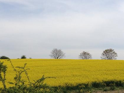 C\'est bientôt le printemps ?_f0038600_22232960.jpg