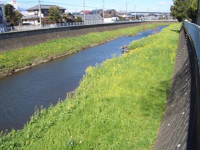 目久尻川菜の花と西善院納札_d0240916_15385447.jpg