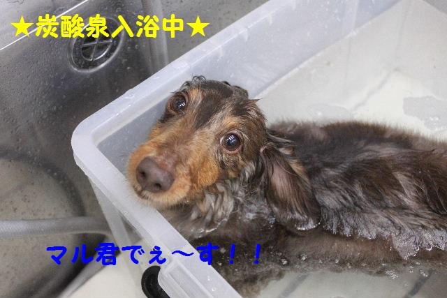 b0130018_18315793.jpg