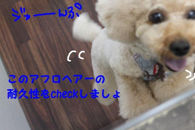 b0130018_18441324.jpg