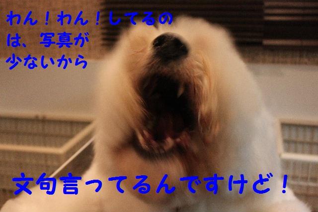 b0130018_18475878.jpg