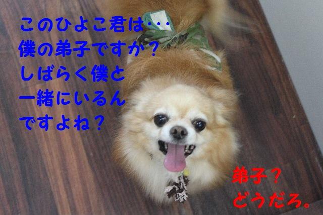b0130018_18493957.jpg