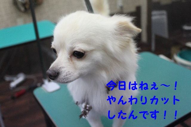 b0130018_1922314.jpg