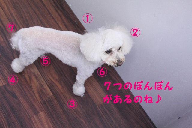 b0130018_1964412.jpg
