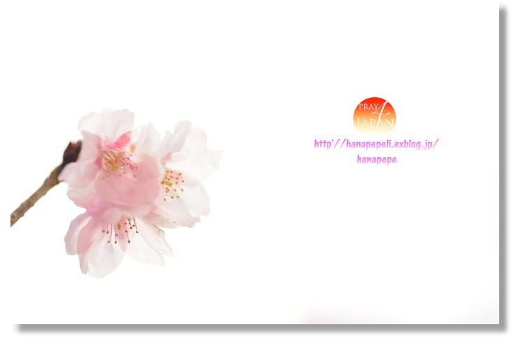 東日本大震災から4年。祈りをこめて…_f0357923_1916686.jpg