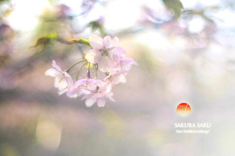 東日本大震災から4年。祈りをこめて…_f0357923_19444136.jpg
