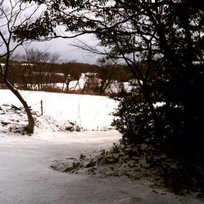冬_a0197647_8131174.jpg