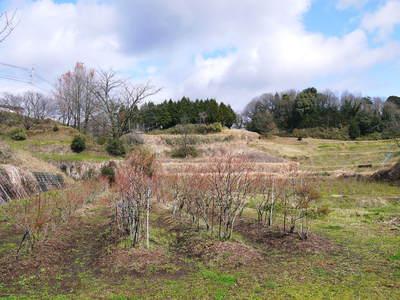 フレッシュブルーベリー 仕上げ剪定と草刈り、土作りの話 その2_a0254656_1714988.jpg