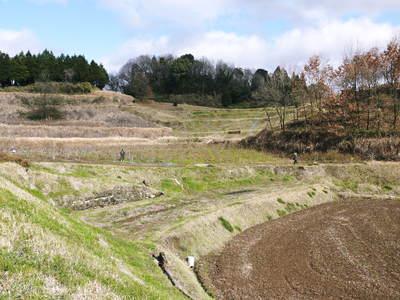 フレッシュブルーベリー 仕上げ剪定と草刈り、土作りの話 その2_a0254656_1720121.jpg