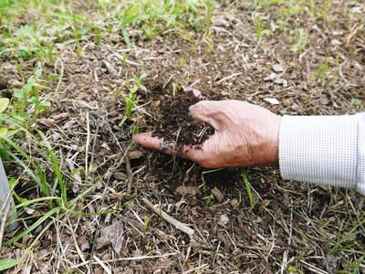 フレッシュブルーベリー 仕上げ剪定と草刈り、土作りの話 その2_a0254656_1736315.jpg