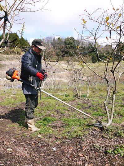 フレッシュブルーベリー 仕上げ剪定と草刈り、土作りの話 その2_a0254656_1811465.jpg