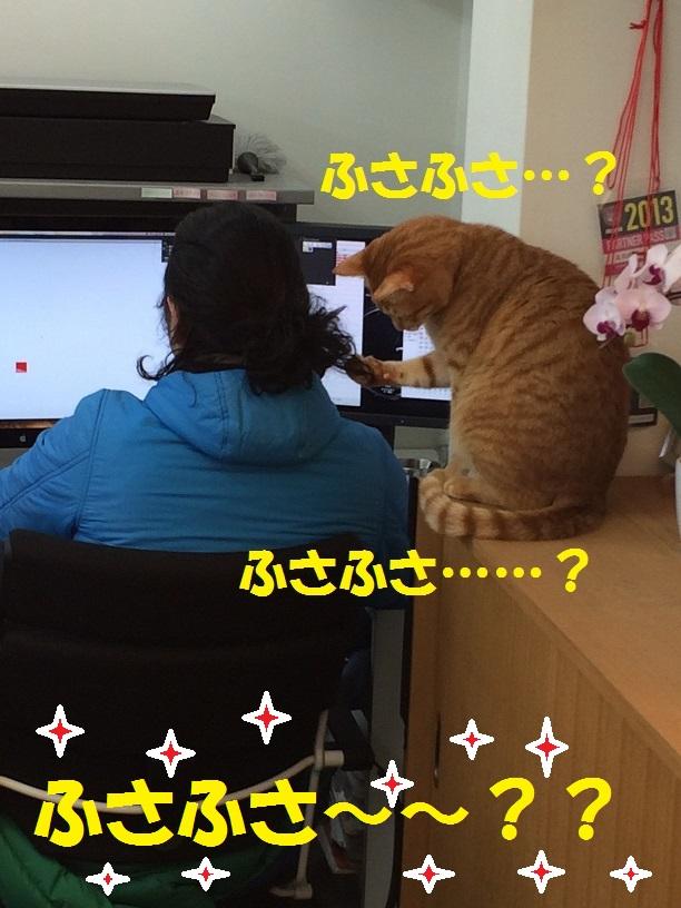 ふさふさ・・・再び_c0226073_18492355.jpg