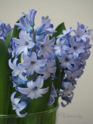 Libertyのお花屋さん_f0238789_21405129.jpg