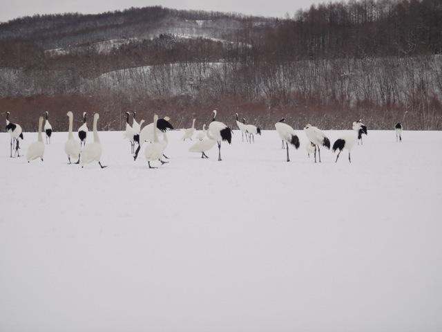 Nature /  Hokkaido_b0195093_09130175.jpg