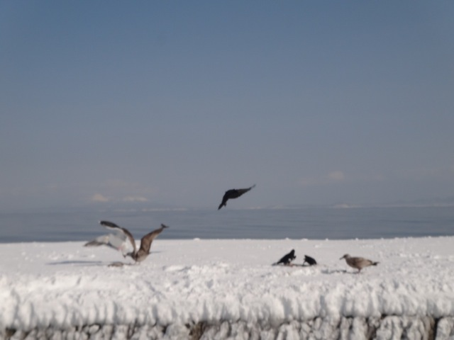 Nature /  Hokkaido_b0195093_09150491.jpg
