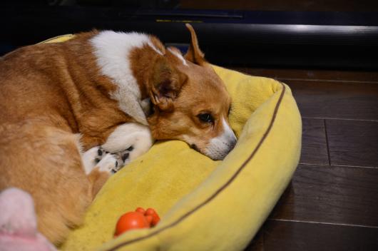 散歩の後は眠くて眠くて!!_b0310424_13295893.jpg